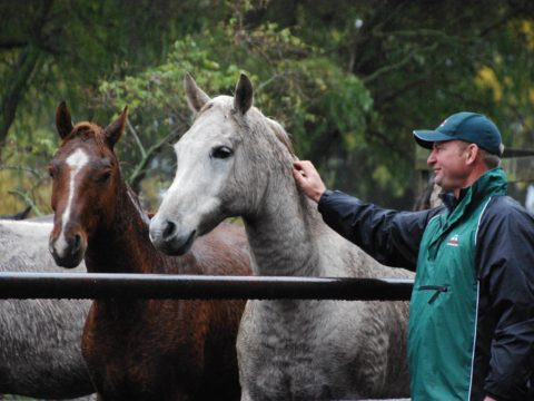 Pav Horses Geoff