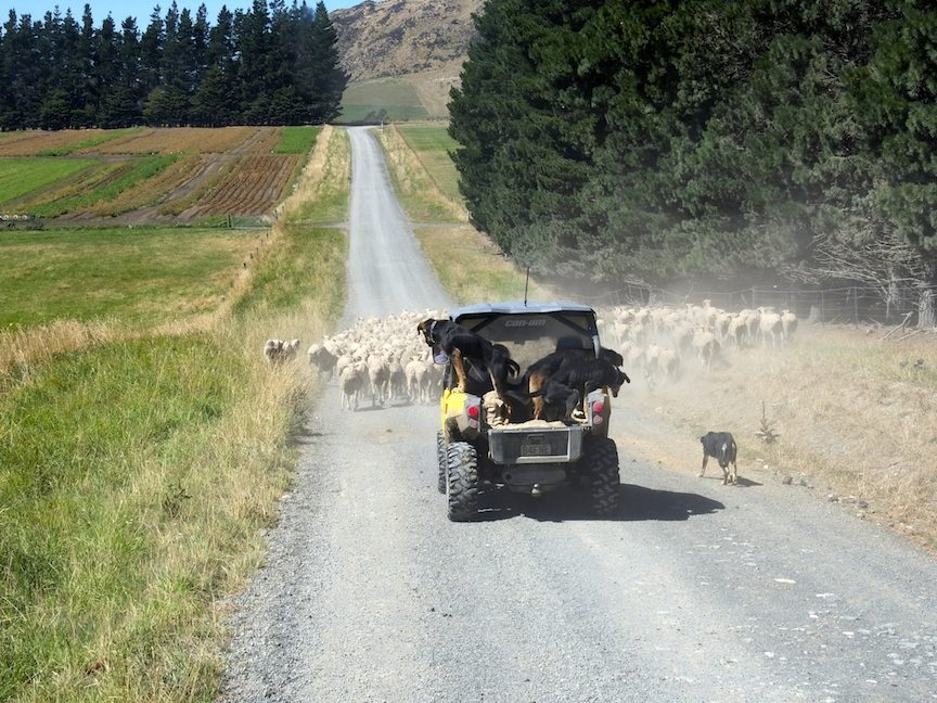 4WD On Road With Dogs