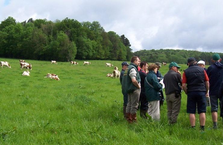 Beef Farm Talk