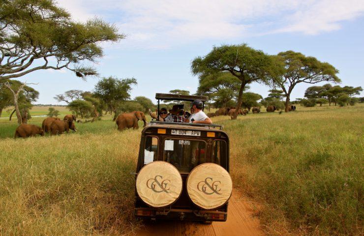 Tanzanian Game Drive